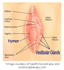 anatomy-of-the-vulva
